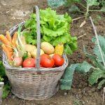 Summer Garden Talk and Potluck