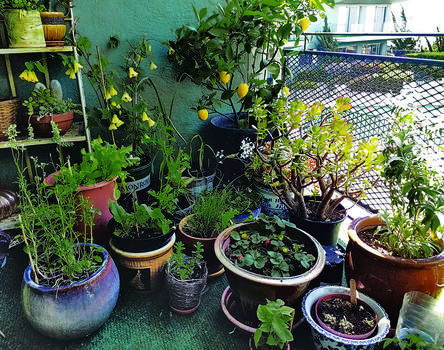 Gardening On Balconies Or Small Spaces Alameda Backyard Growers,Bedroom Small One Room Apartment Design Ideas