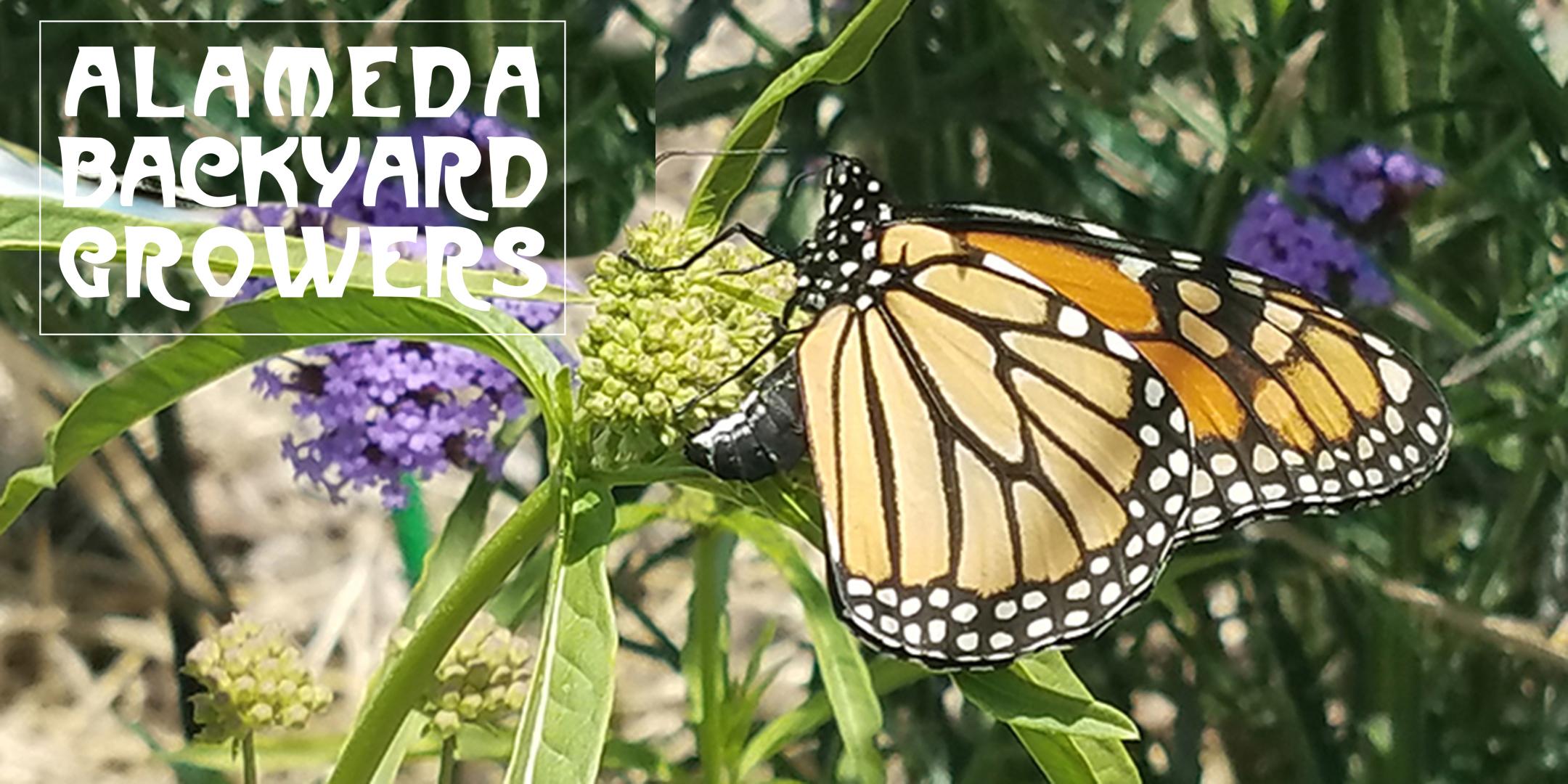 save-monarchs-in-alameda-eventbrite - Alameda Backyard Growers